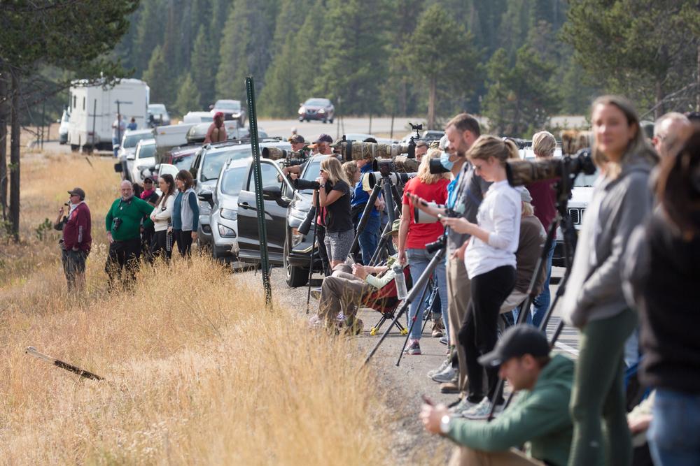 Grand Teton rangers resume use of body video cameras